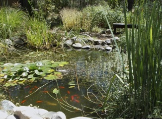 Ananda Meditation Retreat Pond